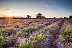 5 советов по съемке красивых фотографий природы