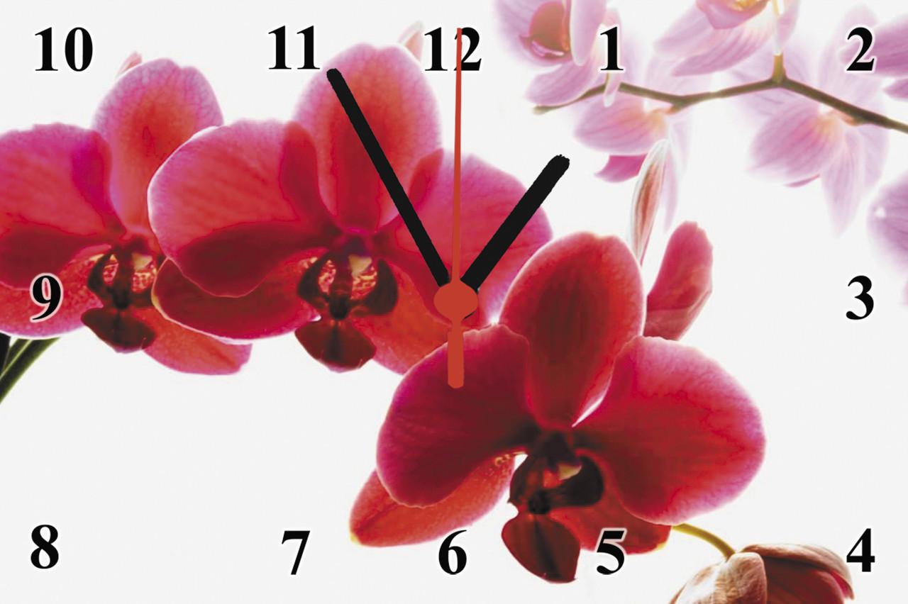 """Годинники настінні скляні """"Фаленопсис"""""""