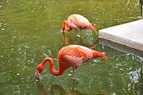 Мексика, фауна в отелях на Ривьере Майя. Фото наших туристов.