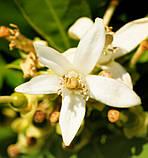 Чоловічі міні-парфуми Instint Yodeyma 15 мл (Помаранчевий цвіт Лаванда Ваніль) духи Йодейма, фото 3