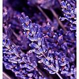 Чоловічі міні-парфуми Instint Yodeyma 15 мл (Помаранчевий цвіт Лаванда Ваніль) духи Йодейма, фото 4