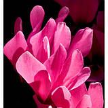 Чоловічі міні-парфуми Acqua Per Uomo Yodeyma 15 мл (Бергамот Цикламен Деревина) духи Йодейма, фото 4