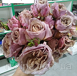 Саженцы розы IOLI