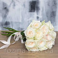 Саженцы розы  White O'Hara
