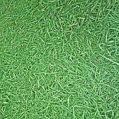 Линолеум IVC NEO Grass / 3 м