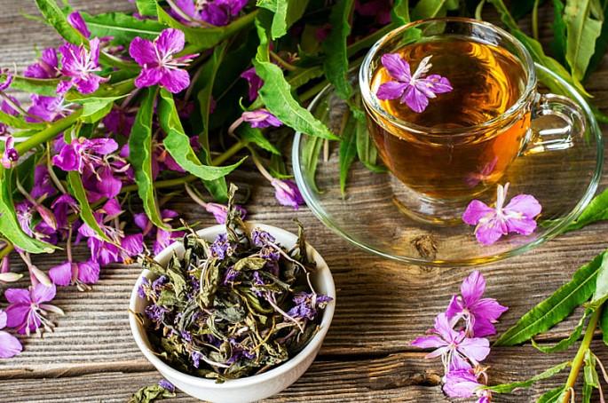Prosztata adenoma kezelés ivan tea