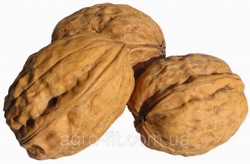Саженцы грецкого ореха сорт Franquette