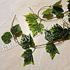 Лиана с листьями винограда зеленая 120см, фото 2