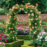 """Садовая арка для роз, винограда и прочих вьюнов """"Spirit"""" (шпалера, опора для цветов) 2300х1600х600 мм"""