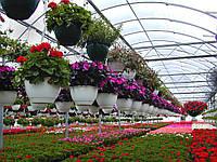 Теплица для выращивания цветов: особенности, советы по обустройству
