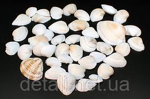 Черепашки белыо-коричневі, плоскі