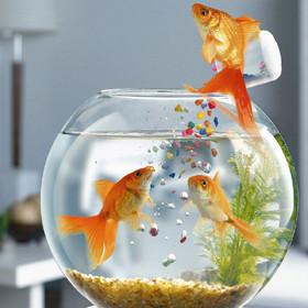 Товари для риб
