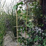 Лесенка бамбуковая на дуге, фото 2