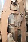 Когтеточка-дерево, башта, дряпалка Tower 4 полички для кішок, фото 3