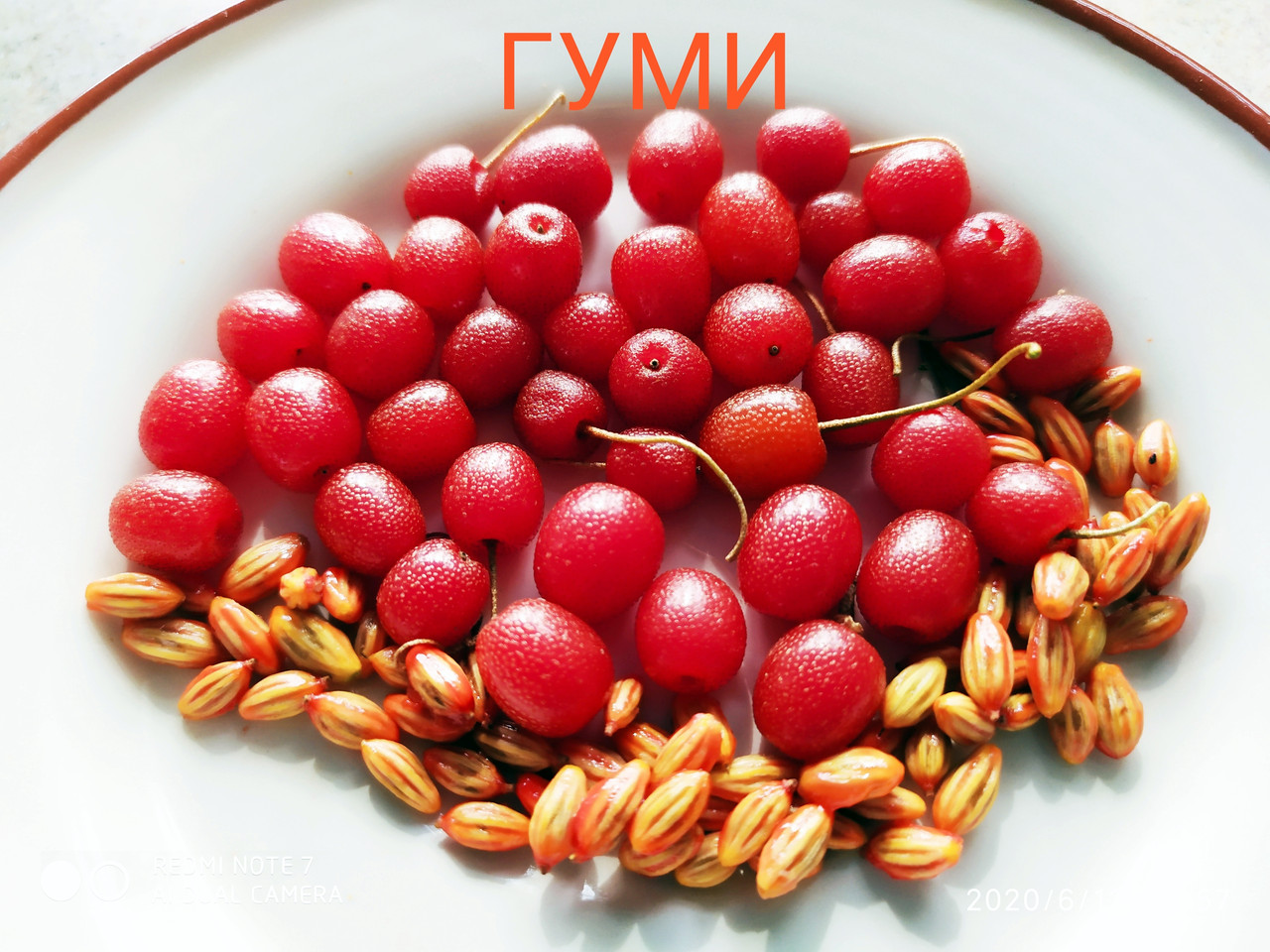 Гуми семена