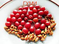 Гуми семена, фото 1