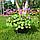 Герань великокореневищна, або Журавець великокореневищний/ Geranium macrorrhizum, фото 3