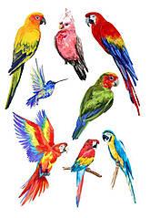 "Вафельна картинка ""Папуги"""
