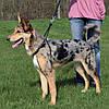 Шлейка для собаки учебная (шея 33-47см/25мм)