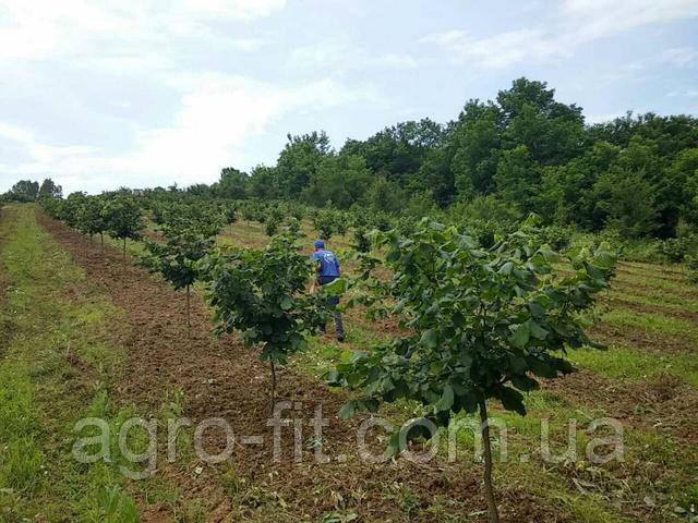 Кубань 3 года 3 гектара