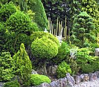 Обрізка формування дерев і чагарників