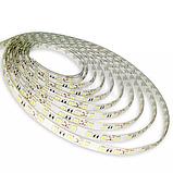 Светодиодная лента OEM ST-12-5050-60-WW-65-V2 теплая белая, герметичная, 5 метров, фото 3