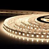 Светодиодная лента OEM ST-12-2835-120-NW-20-V3 1500Lm/m  нейтральная белая, негерметичная, 5метров, фото 2
