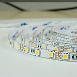 Светодиодная лента BIOM Professional BPS-G3-12-5050-60-WW-20 теплый белый, негерметичная, 5метров, фото 2