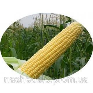 Семена кукурузы Астролайт F1 5000 семян Agri Saaten