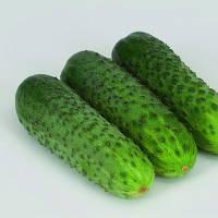 Огурец-корнишон - Караоке F1 (Karaoke RZ) - Rijk Zwaan (Рийк Цваан), уп. 1000 семян (партенокарпический)