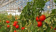 Обслуживание теплиц и особенности выращивания овощей