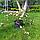 Лапчатка біла/ Лапчатка белая/ Potentilla alba, фото 3