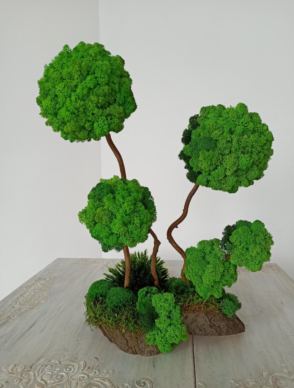 Композиція на стіл з моху, дерева з моху