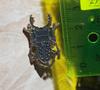 Брошь брошка значок металлический темно серый жук олень насекомое, фото 8