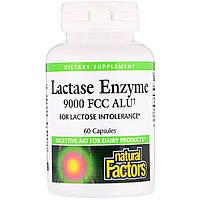 Ензим Лактазы, Lactase Enzyme, Natural Factors, 9000 FCC ALU, 60 Капсул