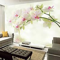 """Фотообои """"Красивые орхидеи"""""""