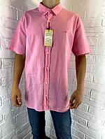 Рубашка мужская Welldone 17 с коротким рукавом розовая XL-6XL