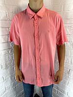 Рубашка мужская Welldone 17 с коротким рукавом коралловая XL-6XL