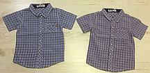 {есть:116,140} Рубашка для мальчиков 195090