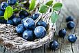 Черника + Лютеин 500 мг 120 капс (Billbery + Lutein 500mg) Diet Food, фото 4