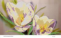Схема для вышивания бисером ''Крокусы'' А3 29x42см