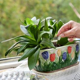 Комплексные удобрения для комнатных и балконных растений