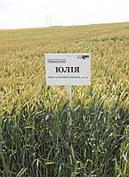 Юлия озимая пшеница безостая Selgen Чехия элита