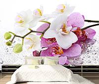 """Фотообои """"Орхидеи на росе"""", фото 1"""
