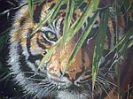 "Как рисовалась картина по номерам MENGLEI ""Амурский тигр"" MG1003"
