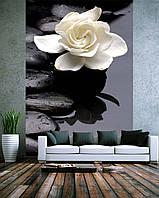 "Фотообои ""Белый цветок на камнях"""
