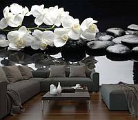 "Фото Обои ""Орхидеи на камнях 2"", фото 1"