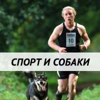 Спорт и собаки