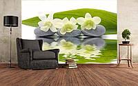 """Фото Обои """"Белая орхидея и камни"""", фото 1"""
