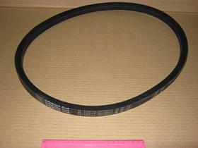 Ремень 21х14х1303 (производство  Rubena)  21х14-1303